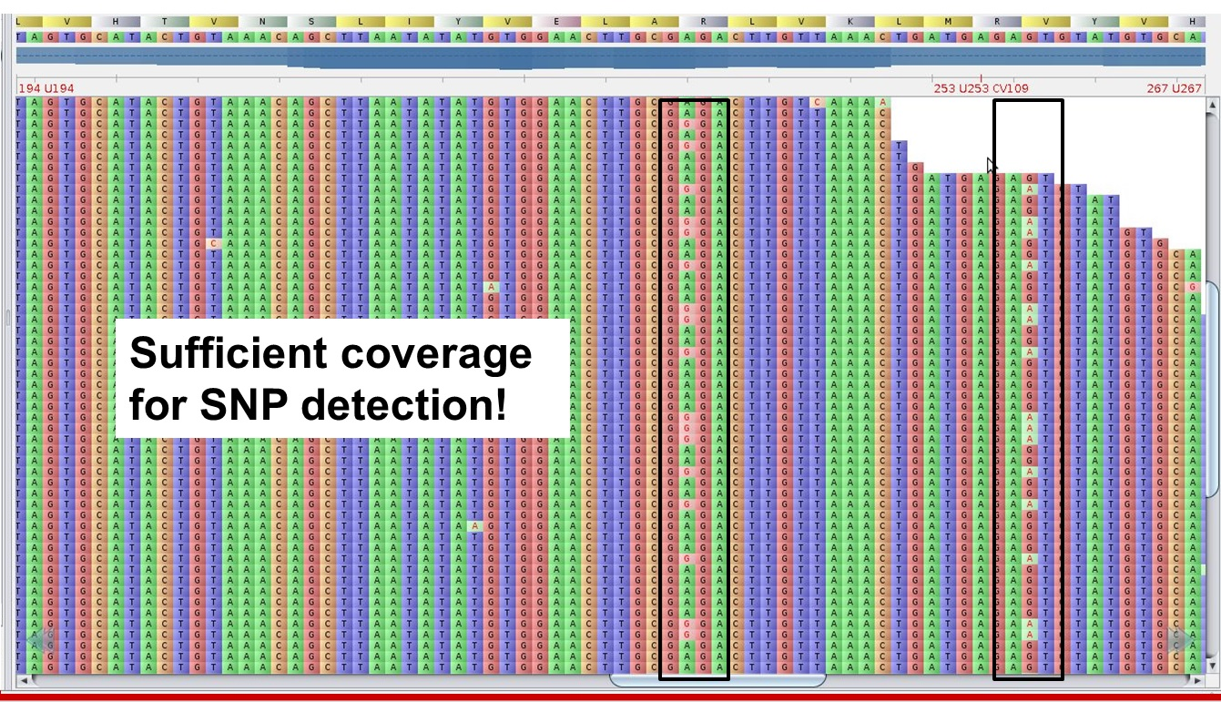 MACExRNA_Seq_SNP-Coverage