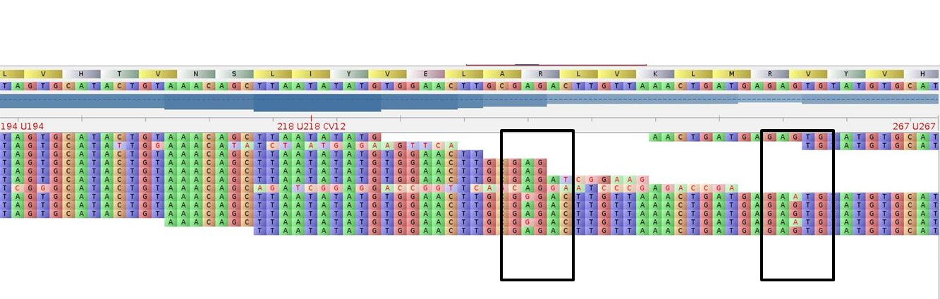 MACExRNA_Seq_SNP-Coverage_RNA-Seq